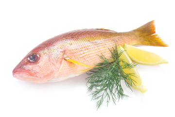 Whole Raw Red Snapper