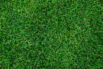 Beautiful green grass texture.