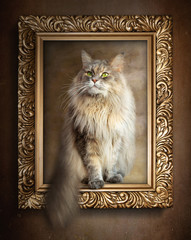 The sitting cat in gold frame