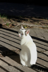 gato sentado mirando hacia arriba