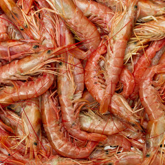 Group of shrimps.