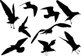 set of nine gull silhouettes