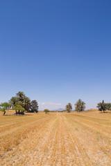 поля Кипра
