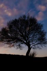 Tree in slihouette