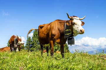 Wall Murals Cow Alpine cows