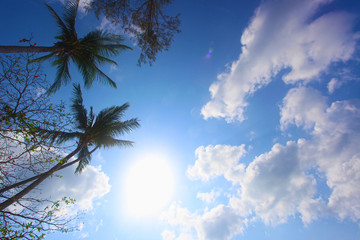Coconut tree under blue sky. Thailand