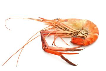 Boiled shrimp isolated on white
