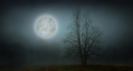 blue moonligh