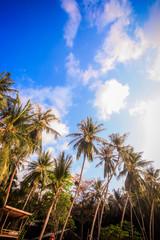 Tropical Background on Koh Phangan