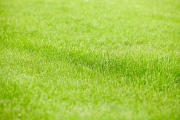 grass backgroun