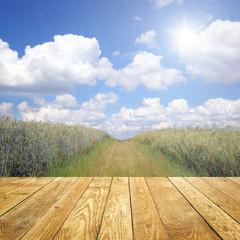 Fototapete - Feldweg mit Holz