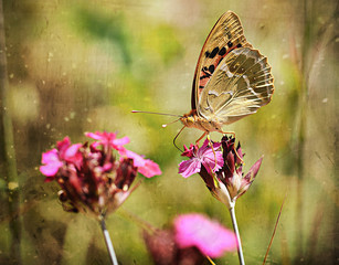Vintage photo of a butterfly