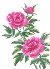 Акварельные цветы, пионы, вариант 2.