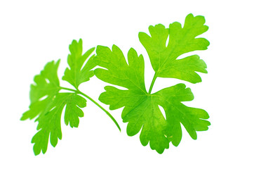 green parsley isolated