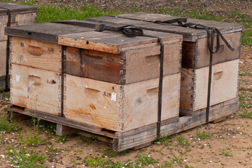 Bee boxes used to pollinate an almond orchard