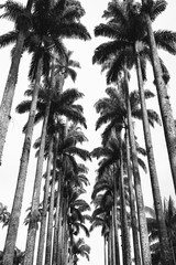Avenue of Royal Palms Botanic Garden