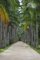 Avenue of Royal Palms Botanic Garden