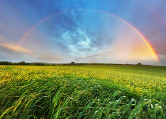 Rainbow over spring field