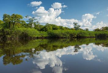 Beautiful Reflection of the Amazon Jungle on Water