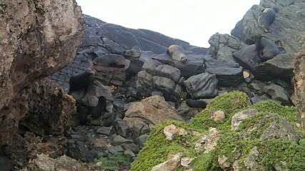 Fotoväggar - Robben