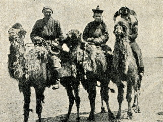 Mongolian camel riders ca. 1920