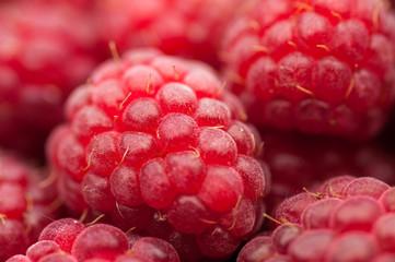 red raspberry background