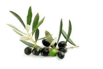 Ramo di ulivo con foglie e olive nere ed una verde
