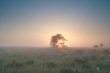 sunrise behind tree on misty marsh