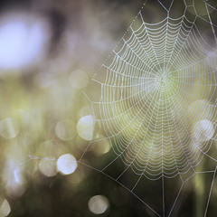 Closeup cobweb morning before sunrise