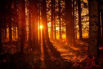 Garden Poster Brown Sonnenaufgang im Wald
