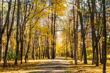 Park on autumn