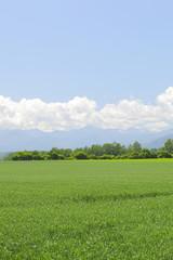 北海道の畑 Field of Hokkaido Japan