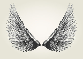 Sketch illustration of wings
