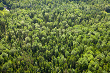 Top view of forest