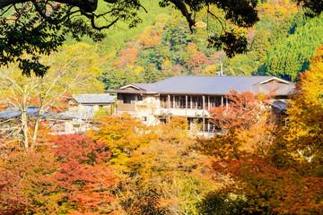 Nice maple season, Japan
