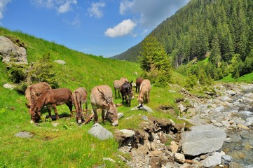 Mountain landscape with river and grazing donkeys