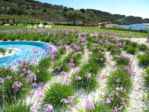 exotische pflanzen pool strand stockfotos und lizenzfreie bilder auf bild 66702452. Black Bedroom Furniture Sets. Home Design Ideas