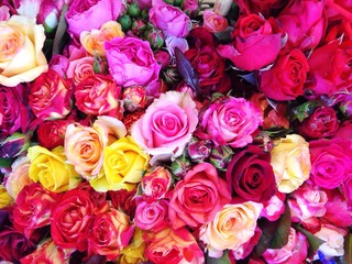 Viele bunte Rosen