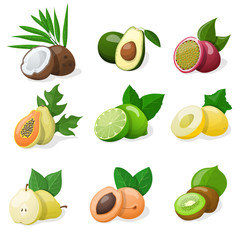Set of exotic fruit. Vector illustration