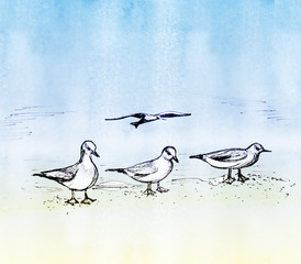 Four seagulls - three sit on the sand and one flies