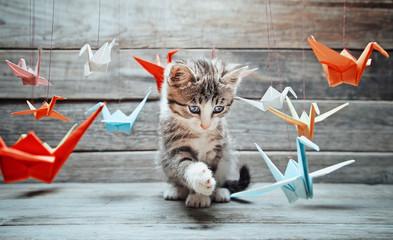 Kociak bawi się z papierowymi żurawiami