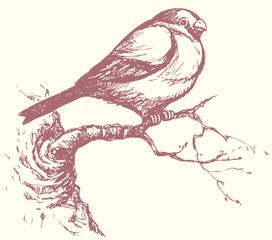 "Vector drawing of a series of ""Birds"". Bullfinch"