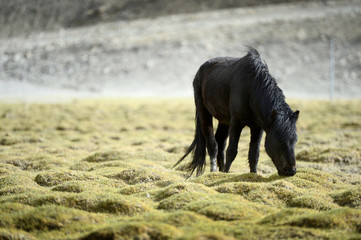 Selective Focus  Horse on Field