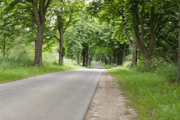 Asphaltierte Straße im Wald