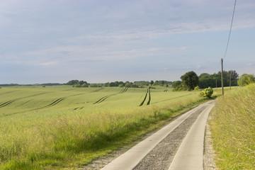 Feldweg am Getreidefeld