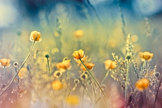 Beautiful nature - meadow flowers