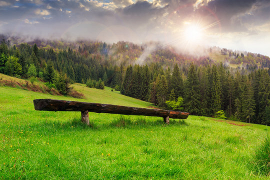wooden bench in front of coniferous forest at sunset