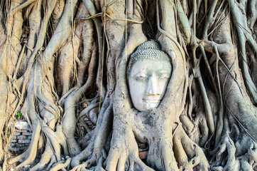 The Face in the Root