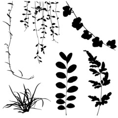 Wall Mural - set black silhouettes of leaf and vine plant Vector illustration