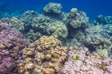 Coral reef at Surin national park, Thailand